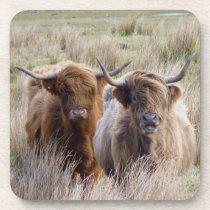 Scottish Highland Cattle Beverage Coaster