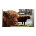 Scottish Highland cattle ~ biz card Double-Sided Standard Business Cards (Pack Of 100)