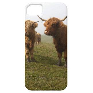 Scottish Highland Cattle - Greener Pastures! iPhone SE/5/5s Case