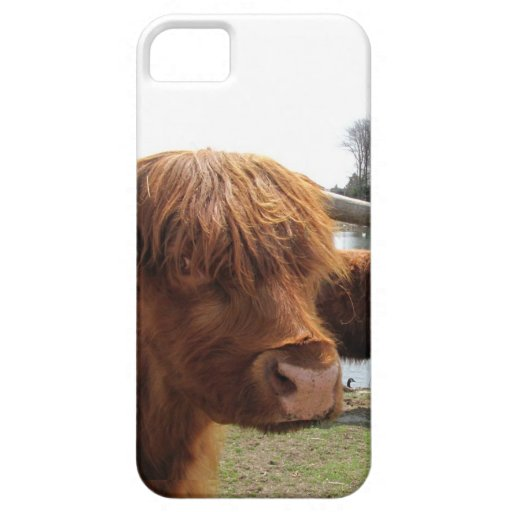 Scottish Highland Cattle ~ iPhone 5 CaseMate Case iPhone 5 Covers