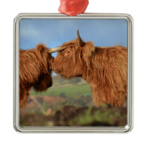 Scottish Highland Cattle Metal Ornament