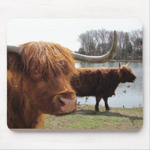 Scottish Highland Cattle ~ mousepad