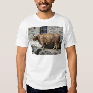 Scottish Highland Cattle Portrait Tee Shirt
