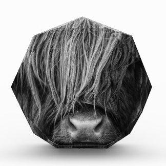 Scottish Highland Cattle - Scotland Acrylic Award