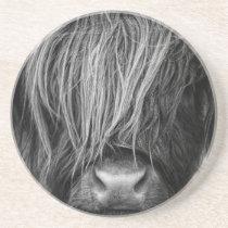 Scottish Highland Cattle - Scotland Sandstone Coaster