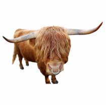 Scottish highland cattle statuette
