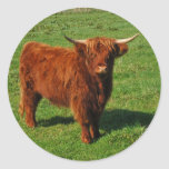 Scottish Highland Cattle Stickers