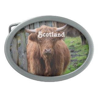 Scottish Highland Cow Oval Belt Buckles