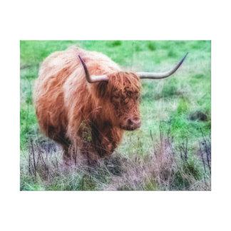 Scottish Highland cow canvas