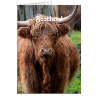 Scottish Highland Cow Stationery Note Card