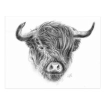 Scottish Highland Cow Illustration Postcard