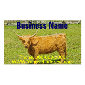 Scottish Highland Cow In Farm Field Business Card
