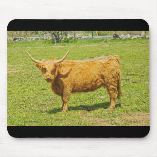 Scottish Highland Cow In Farm Field Mouse Pad