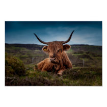 Scottish Highland Cow in Pasture Poster Print