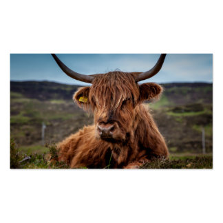 Scottish Highland Cow Longhorn Bull Rancher Business Card Templates