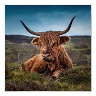 Scottish Highland Cow Longhorn Bull Rancher 5.25x5.25 Square Paper Invitation Card