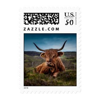 Scottish Highland Cow Longhorn Bull Rancher Postage