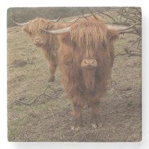 Scottish highland cow photograph stone coaster