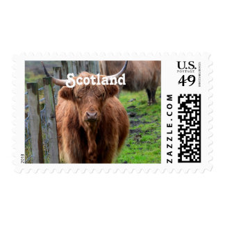 Scottish Highland Cow Postage Stamps