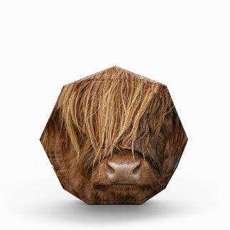 Scottish Highland Cow - Scotland Award
