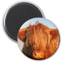 Scottish Highland Cow - Scotland Magnet