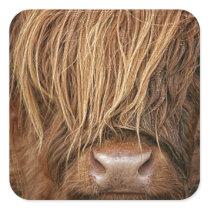 Scottish Highland Cow - Scotland Square Sticker