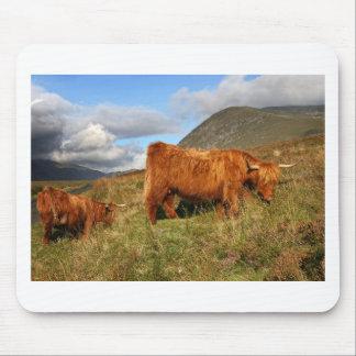 Scottish Highland Cows - Scotland Mouse Pad
