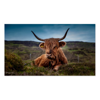 Scottish Highland longhorns Rancher Double-Sided Standard Business Cards (Pack Of 100)
