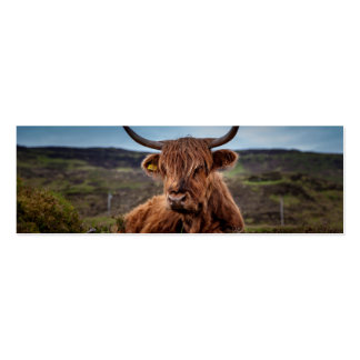 Scottish Highland longhorns Rancher Double-Sided Mini Business Cards (Pack Of 20)