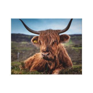 Scottish Highland longhorns Rancher Canvas Print