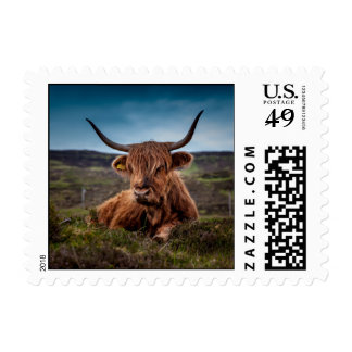 Scottish Highland longhorns Rancher Postage