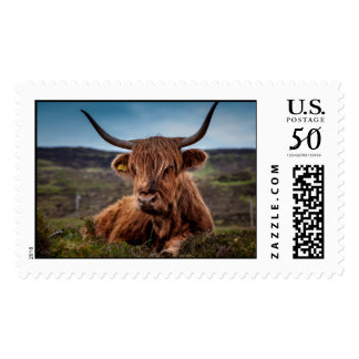 Scottish Highland longhorns Rancher Postage