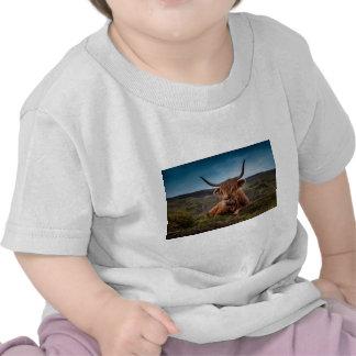 Scottish Highland longhorns Rancher T Shirts