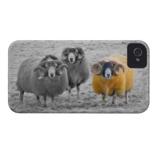 Scottish Rams iPhone 4 Cover