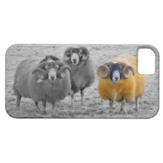 Scottish Rams iPhone SE/5/5s Case