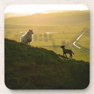 Scottish Sheep And Lamb Beverage Coaster