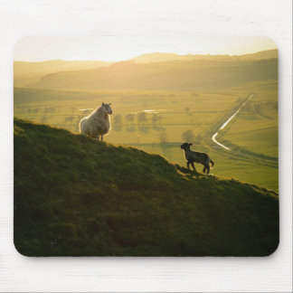 Scottish Sheep And Lamb Mouse Pad