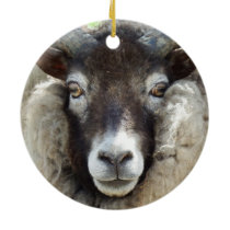Scottish Sheep Close Up Ceramic Ornament