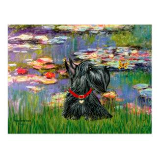 Scottish Terrier 12 - Lilies 2 Postcards