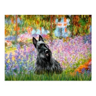 Scottish Terrier 2 - Garden Postcard