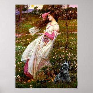 Scottish Terrier 3 - Windflowers Poster