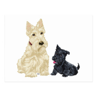Scottish Terrier Adult and Puppy Postcard