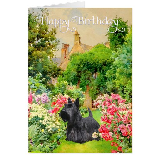 Scottish Terrier Birthday Card