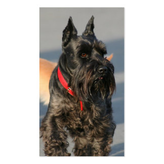 Scottish terrier business cards
