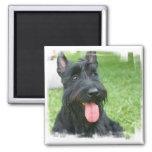 Scottish Terrier Dog Magnet