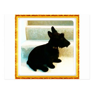 Scottish Terrier Drawings Postcard