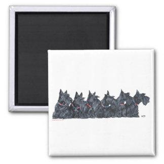 Scottish Terrier Gathering Magnet