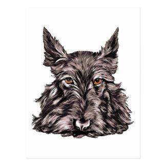 Scottish Terrier in Black Postcard
