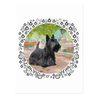 Scottish Terrier in Dappled Sunlight Postcard