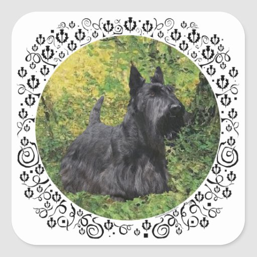 Scottish Terrier in Green Woods Square Sticker